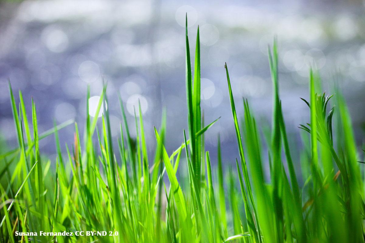 Natura e vitalità - Foto di Susana Fernandez